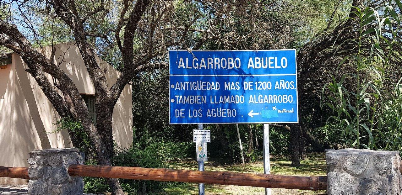 Algarrobo de los Aguero (Algarrobo Abuelo) (Merlo) - 2021 Qué saber antes  de ir - Lo más comentado por la gente - Tripadvisor