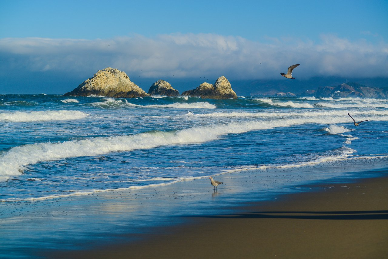 Ocean Beach San Francisco 2020 All