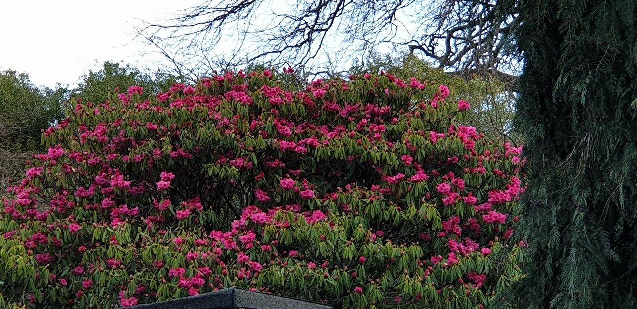 Royal Botanic Garden Edinburgh Aktuelle 2020 Lohnt Es Sich