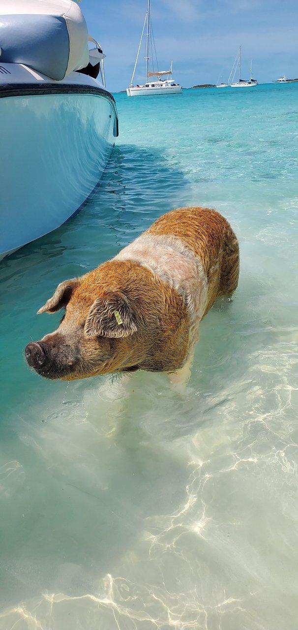 Bahamy prasata