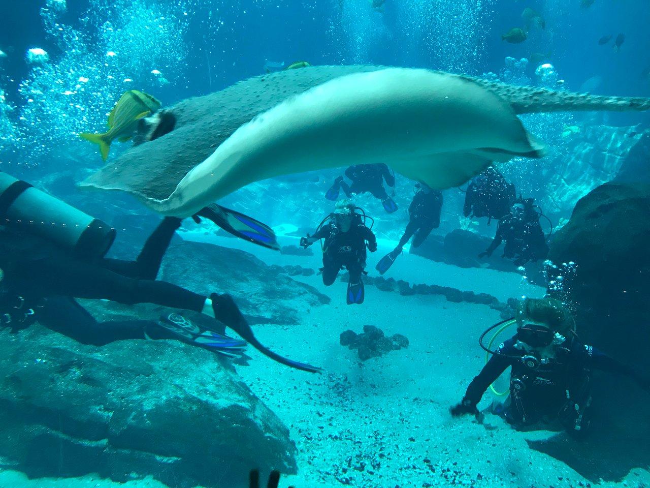 Georgia Aquarium Atlanta 2020 All