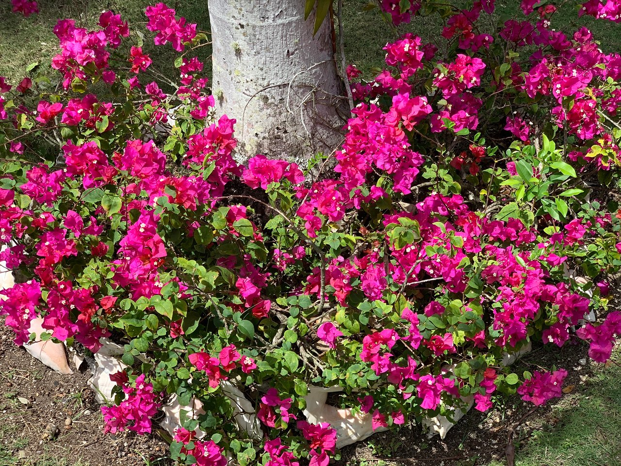 Troppe Mosche In Giardino queen elizabeth ii botanic park (grand cayman): aggiornato