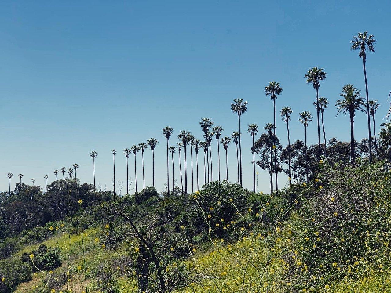 Miksi maastopalot koettelevat nyt Kaliforniaa? Jopa rekka-auton aiheuttama kipinäsuihku ja kaatuvat puut voivat aiheuttaa vakavat tuhot