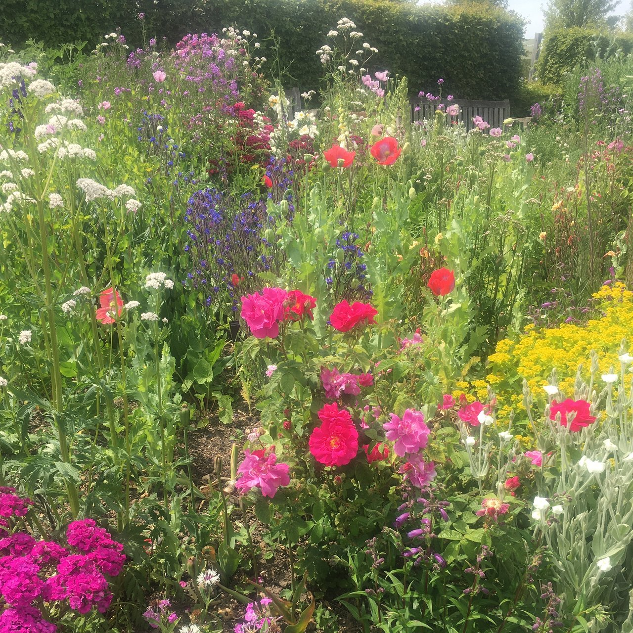 Rhs Garden Hyde Hall Chelmsford 2020 All You Need To Know