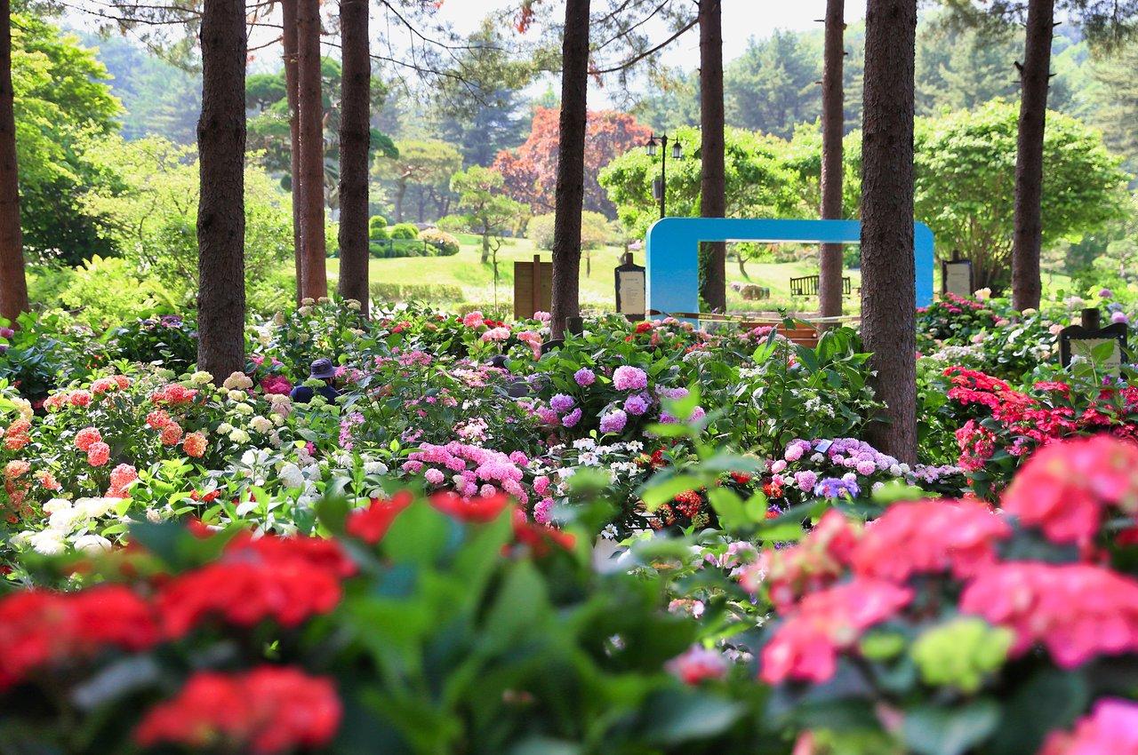 The Garden of Morning Calm (Gapyeong-gun) - 2020 All You Need to ...
