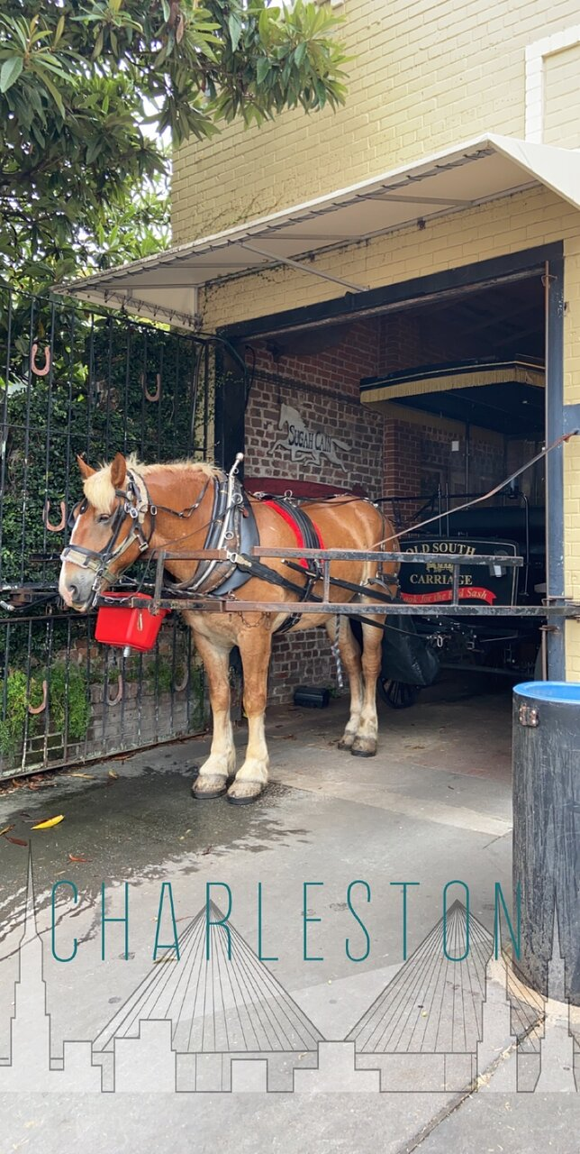 Tripadvisor Romantic Christmas Sleigh Ride Provided By Old South Carriage Company Charleston Coastal South Carolina