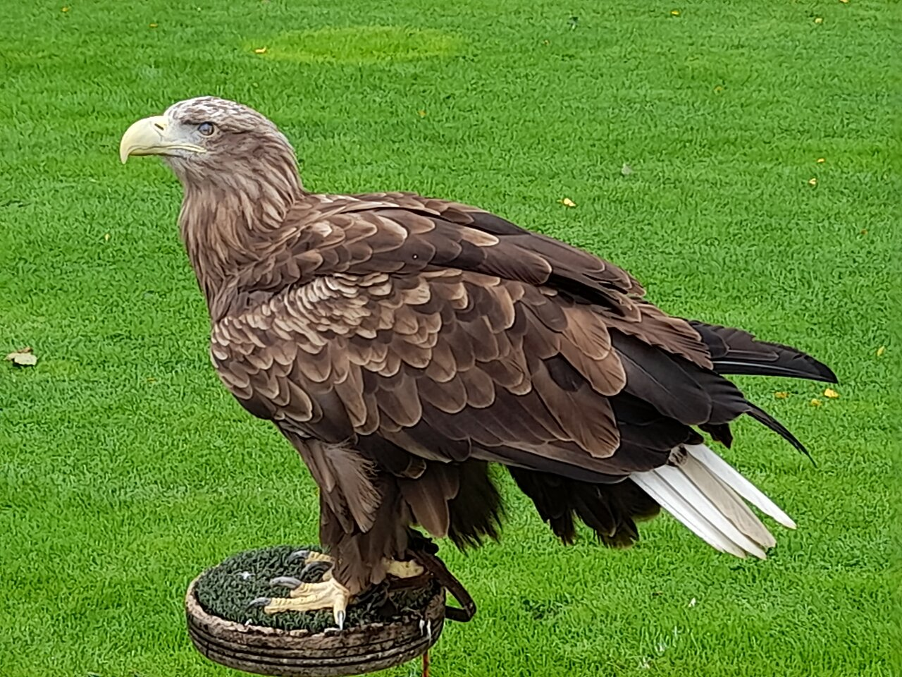 Falconry Uk Thirsk Birds Of Prey Centre 2020 All You Need To Know Before You Go With Photos Tripadvisor