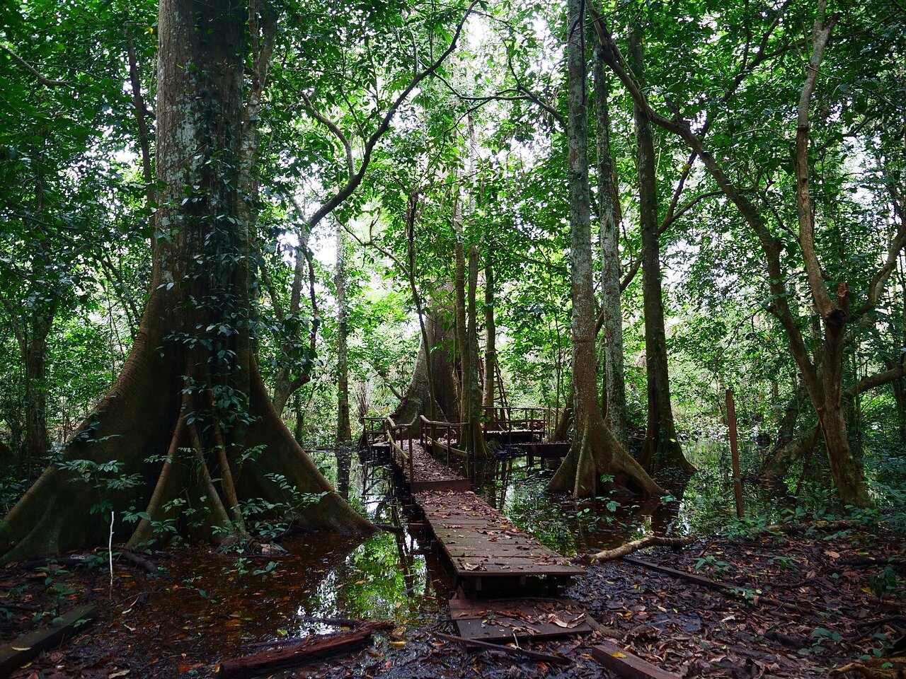Okomu National Park (Benin City) - 2021 All You Need to Know BEFORE You Go  (with Photos) - Tripadvisor