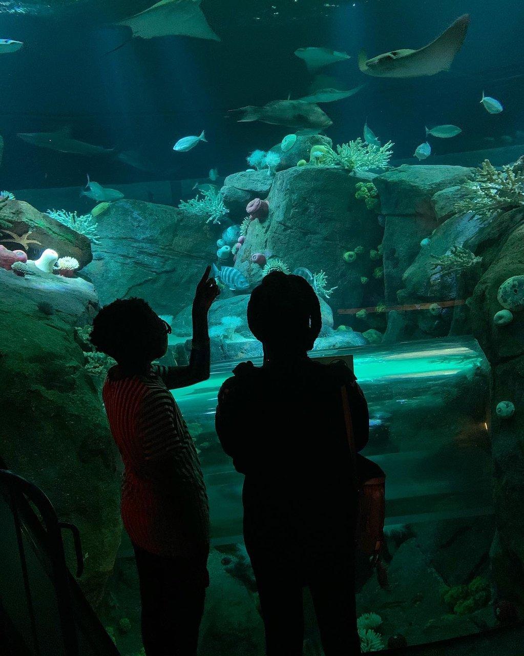 New York Aquarium Brooklyn 2020 All