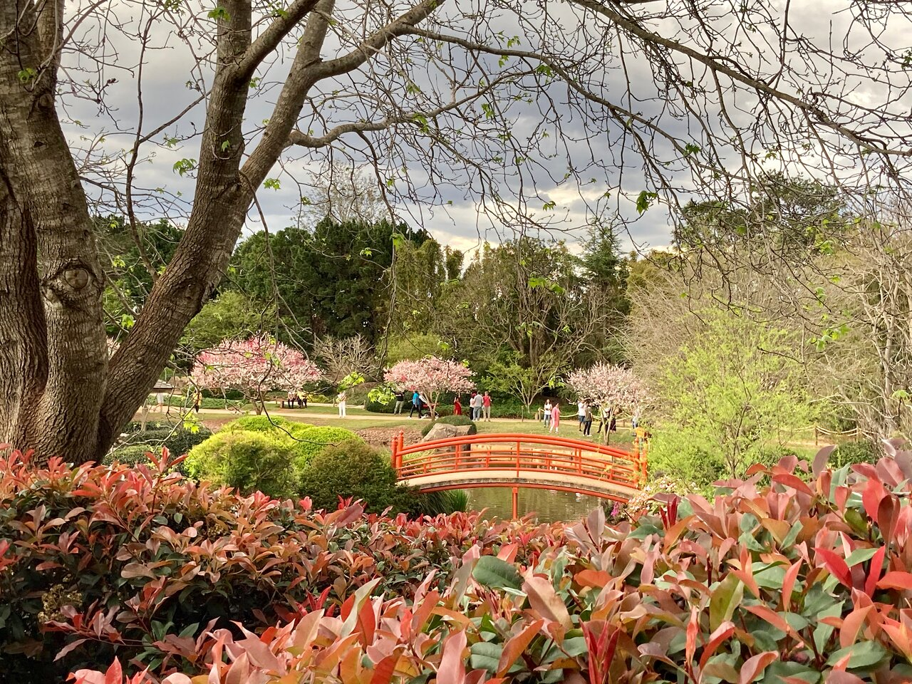Japanese Garden Toowoomba Updated 2020 All You Need To Know Before You Go With Photos