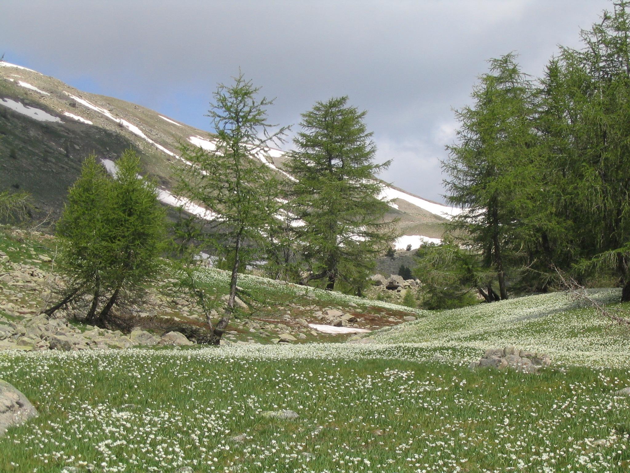 Rhone-Alpes