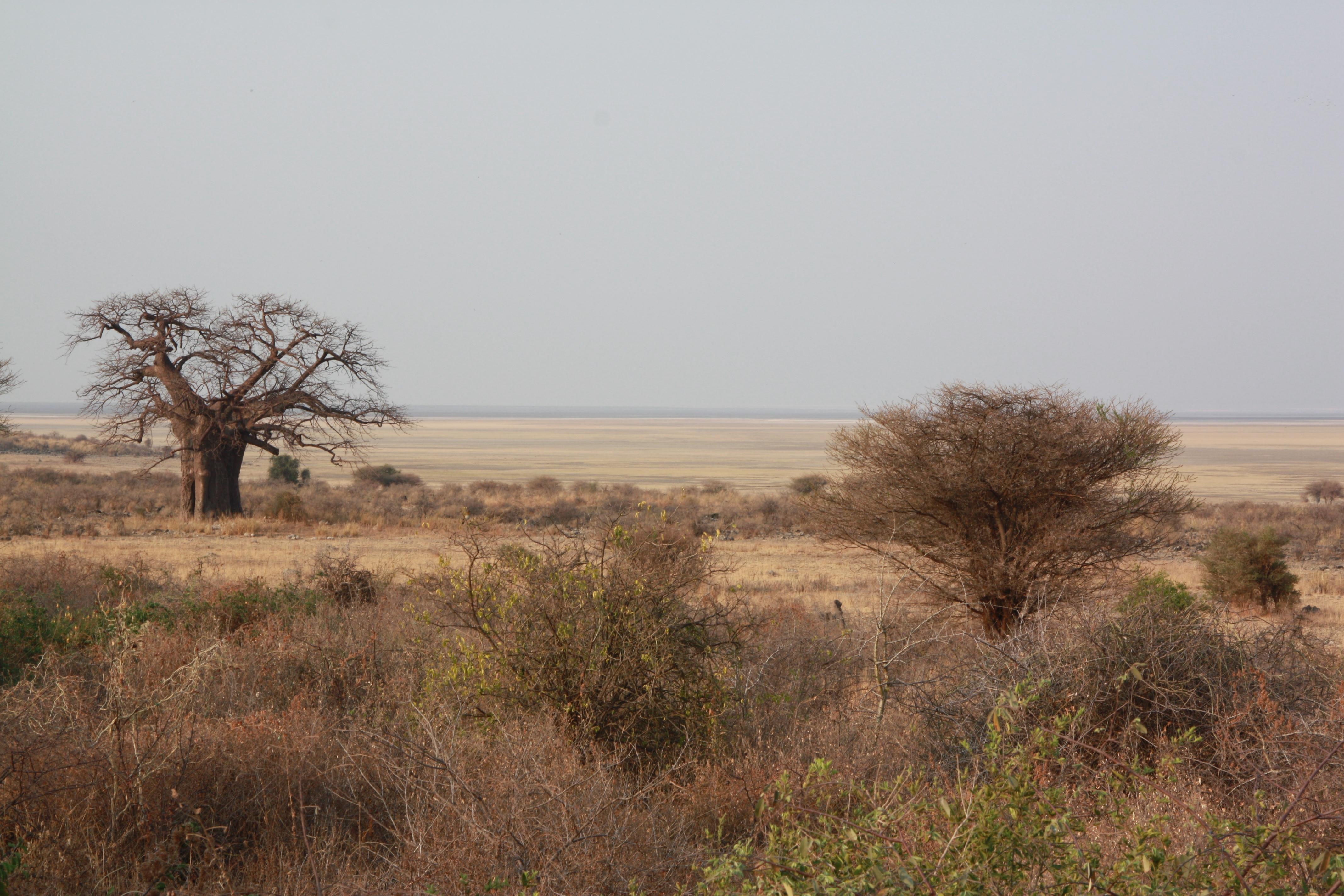 Wild Africa Lodge