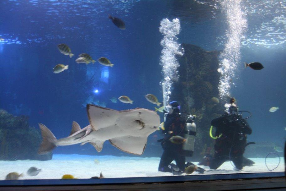 Newport Aquarium Ky Top Tips Before You Go With Photos