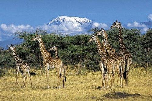 Zanzibar Land Animal Park (ZALA)