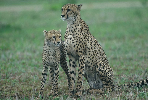 EuroZulu Guided Tours & Safaris