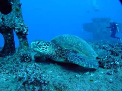 ZX Diving