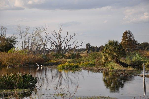 bare trees amid the marsh