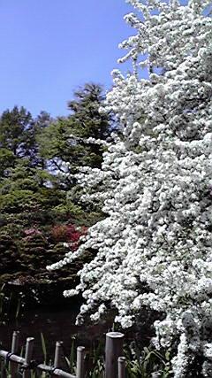 Botanic Garden Hokkaido University