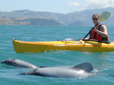 Akaroa Guided Kayak Safari
