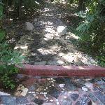 Global Creek at Jo Jo's Jungle Retreat