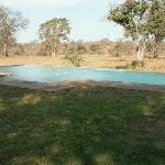 Photo of Kingscamp Timbavati Private Nature Reserve