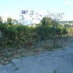 Photo of Il Gattopardo Hotel Terme & Beauty Farm Forio