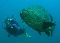 Pepe's Dive Center