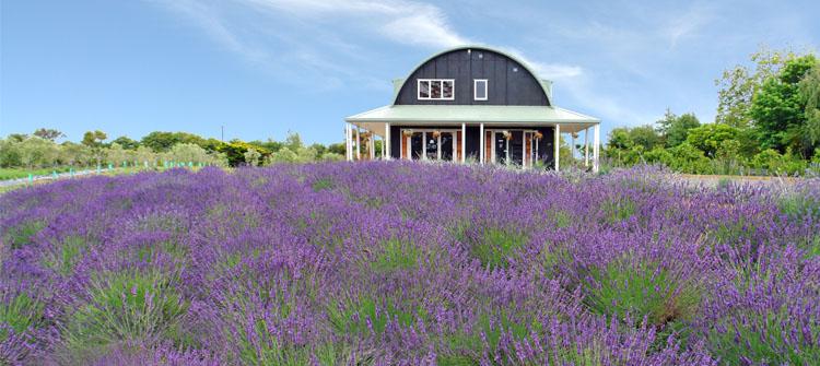Lavender Hill