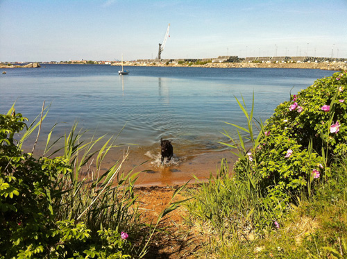 Verkö in Karlskrona, Sweden - a perfect place to let your dog play in the Baltic Sea