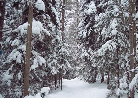 Wiessner Woods