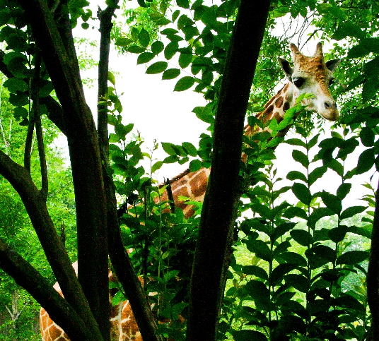 Zoo Of Acadiana Broussard LA Top Tips Before You Go with