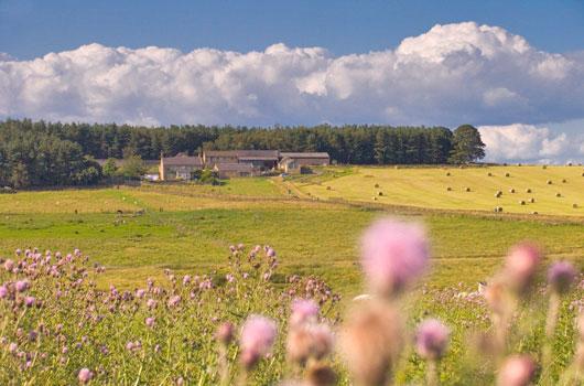 Grindon Farm - Cartshed & Old Farmhouse