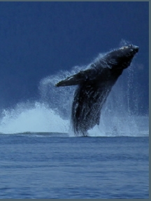 Whale Song Cruises