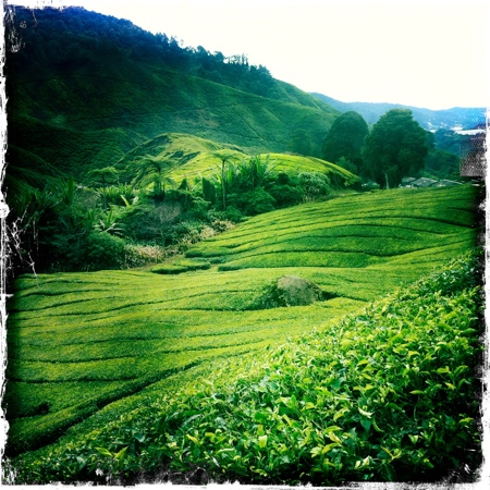Cameron Highlands Trail No. 10