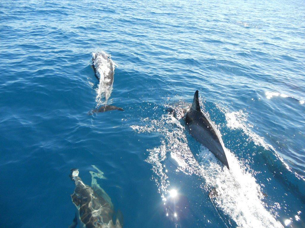 dolphin seafaris mount maunganui new zealand top tips before