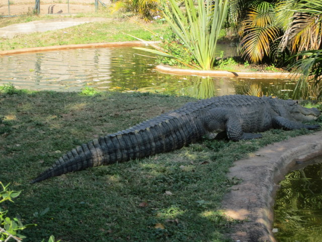 Sabie River Bungalows Part - 49: Perryu0027s Bridge Reptile Park