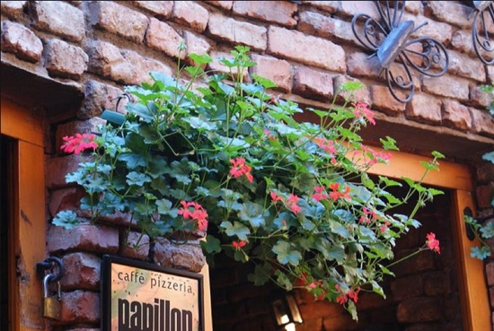Caffe Pizzeria Papillon