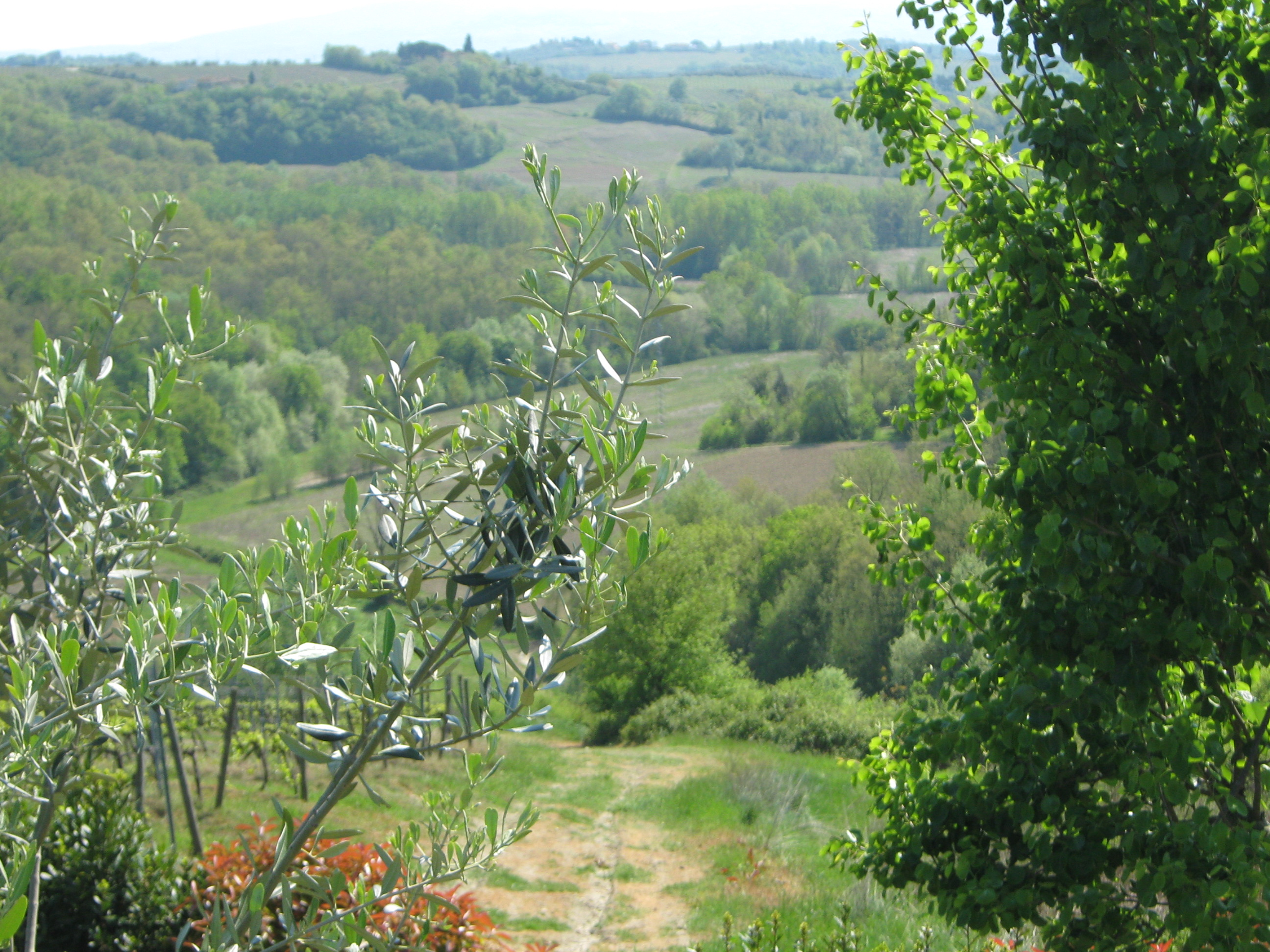 Montespertoli Italy  city images : Podere Villa Bassa Montespertoli, Italy Tuscany Ranch Reviews ...