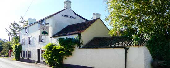 The Vine Tree