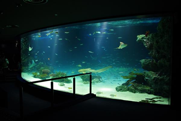 Sunshine Aquarium (Toshima, Japan): Top Tips Before You Go (with Photos) - Tr...