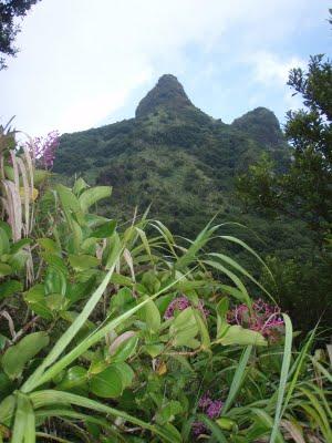 Mt Hibok-Hibok