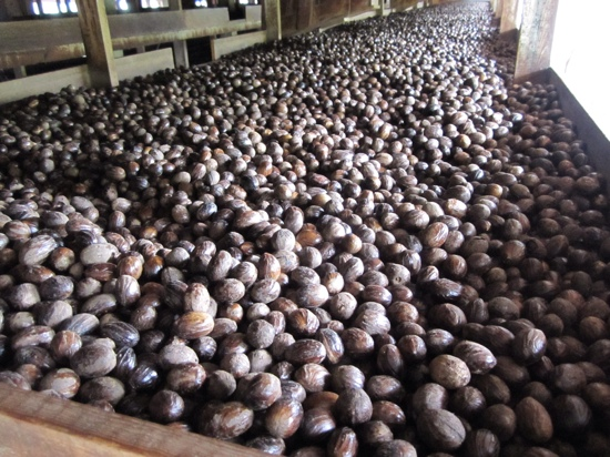 ‪Grenada Co-Operative Nutmeg Association‬