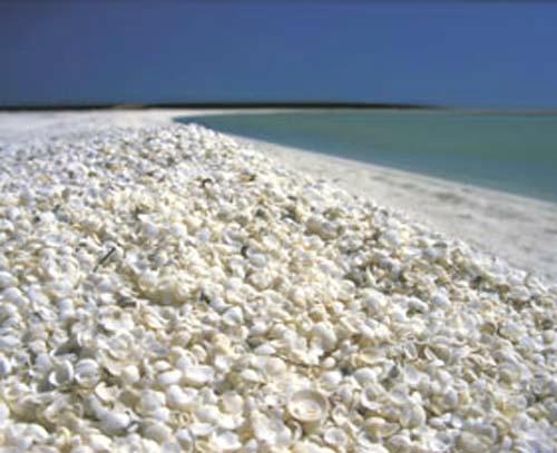 Plaża Shell Beach