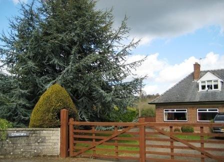 Cynhynfa Country Guest House