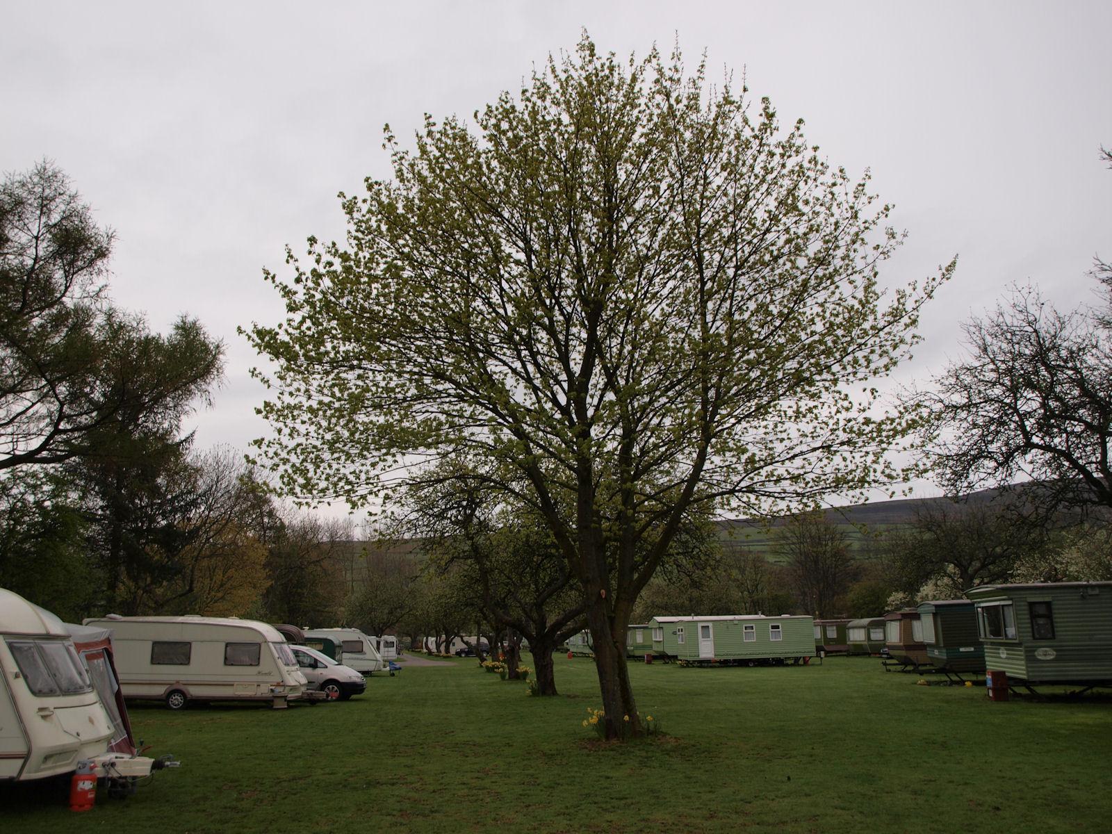Orchard Caravan Park