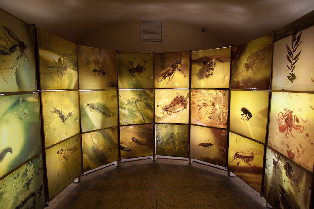 музей янтаря в калининграде фото
