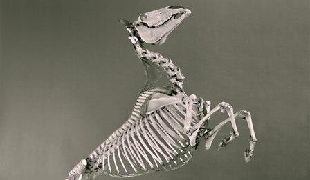 Museo di Anatomia degli Animali Domestici