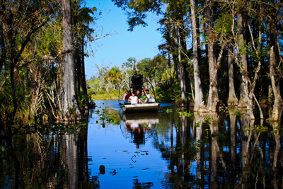 Airboat in the Cypress Hammock