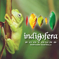 Indigofera Ecotours