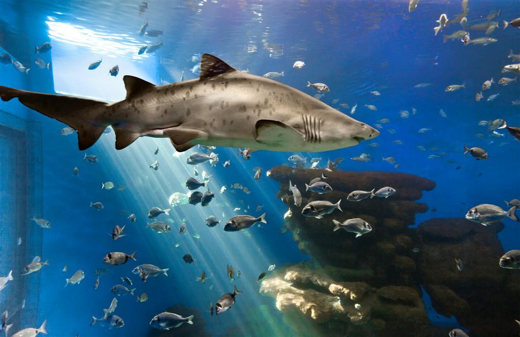 palma aquarium palma de majorque ce qu il faut savoir pour votre visite tripadvisor